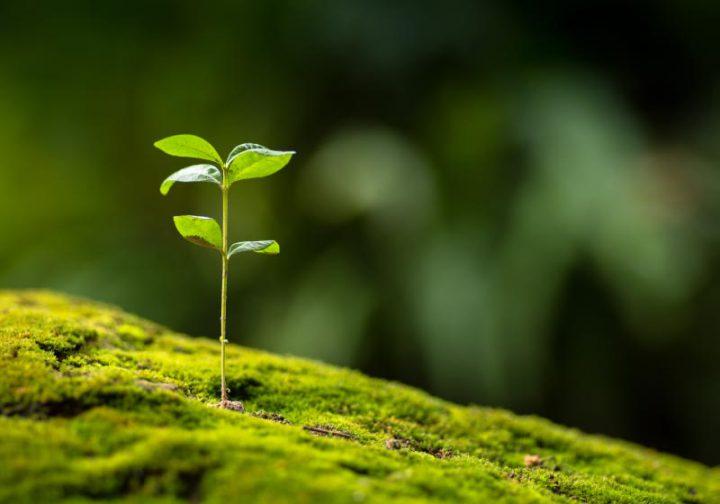 環境・エネルギーへの取り組み